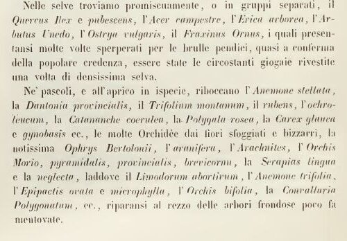 """Sul """"Prospetto della flora ligustica e dei zoofiti del mare Ligustico"""""""